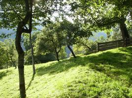 Streuobstwiese in Kärnten